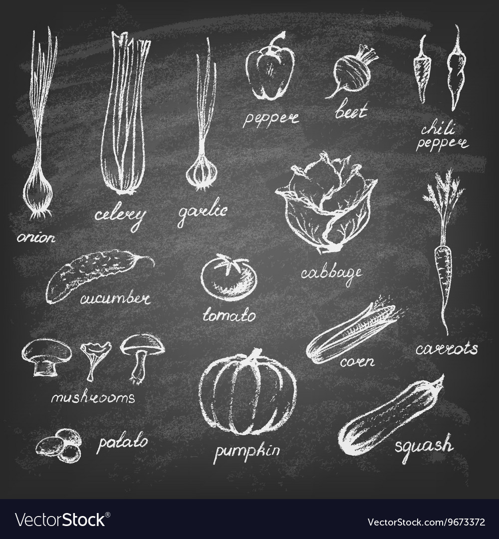 Collection of handdrawn vegetables vector