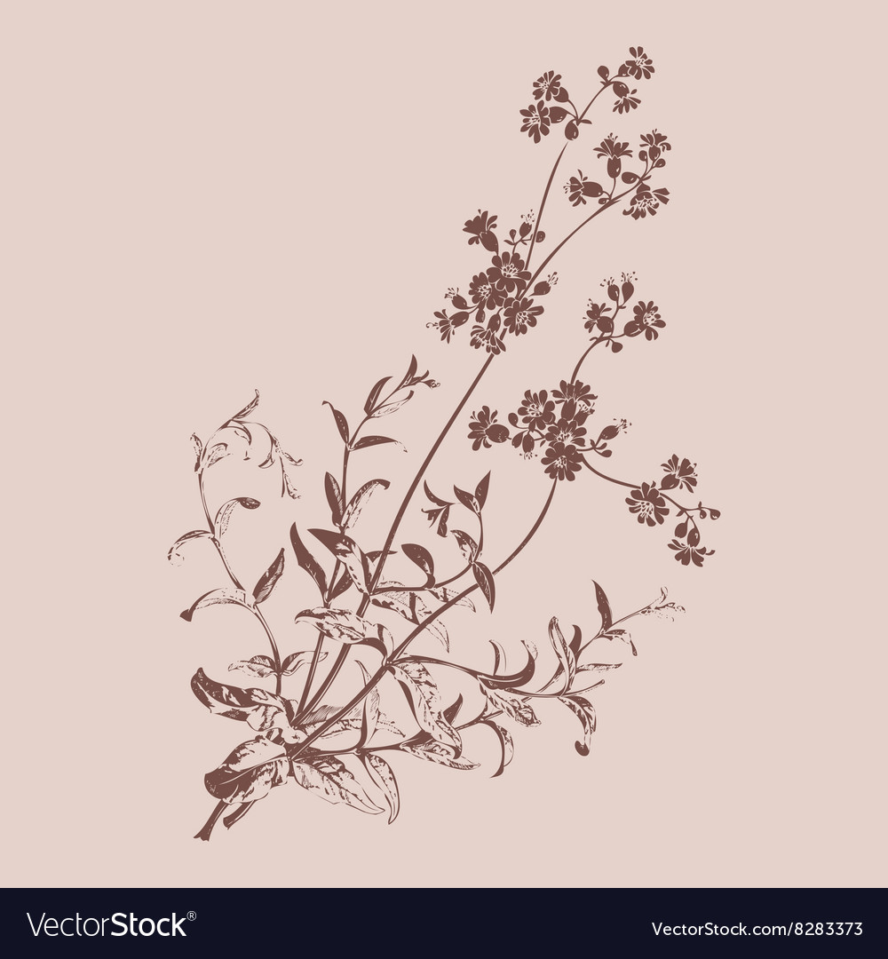 Botanical branches with flowers isolated herbal vector