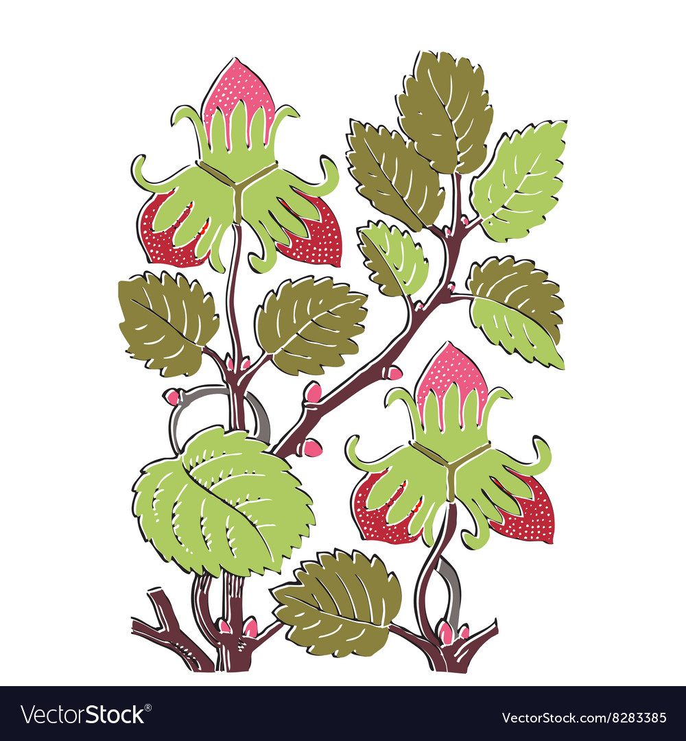Colorful botanical hand drawn strawberry bush vector