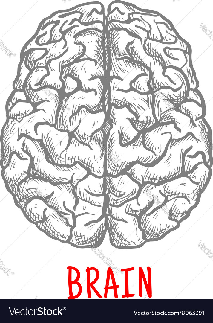 Top view of human brain sketch style vector