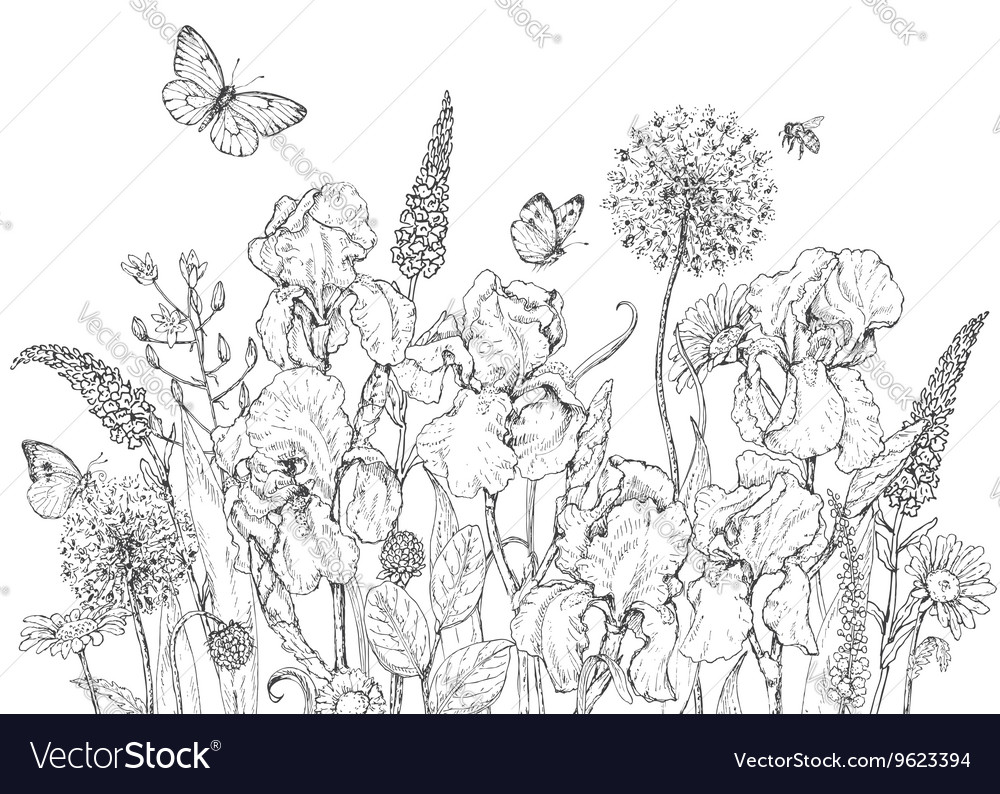 Iris butterfly monochrome vector
