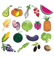 Collection of various fruits and vegetables vector image