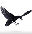 Black raven on white background vector image vector image