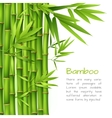 Realistic bamboo background vector image