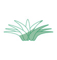 isolated savila plant vector image