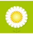daisy on green background vector image