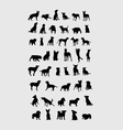 Dog Collection Silhouettes vector image