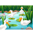 Four ducks living in the pond vector image