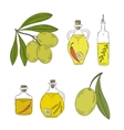 Branch olive tree with olives and bottle of oil on vector image