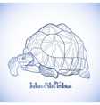 Indian star tortoise vector image