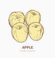 set of drawing apples golden delicious elements vector image