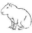 capybara vector image vector image