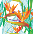 Seamless floral pattern with Strelitzia on white vector image vector image