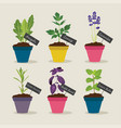 herb garden with pots of herbs set 4 vector image vector image