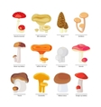 Edible mushrooms and fungus icons set vector image