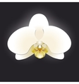 White orchid isolated on a black background vector image