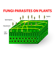 Fungi parasites on plants vector image vector image