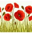 Poppy grass seamless wallpaper vector image