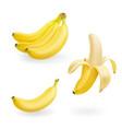 banana fruit set realistic icons vector image
