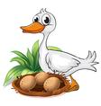 A duck beside her nest vector image