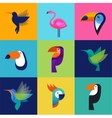 Tropical birds - set of icons vector image vector image