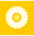 big daisy on yellow background vector image