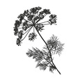dill vector image