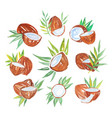 coconuts with palm leaves set of watercolor vector image