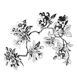Hand drawn sakura branch with blossom cherry vector image vector image