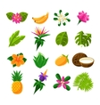 Tropical Exotic Fruits And Flora Set Of Icons vector image