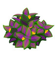 unusual purple flower plant isolated vector image vector image