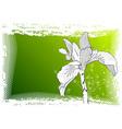 iris drawing vector image vector image