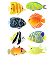 Collection of tropical fish vector image vector image