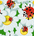 background with daisies and baby ladybirds vector image