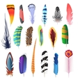 Collection of detailed color bird feathers set vector image