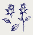 sketch rose flower bud and leaves vector image
