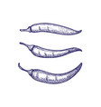 hand drawn set of chili peppers isolated vector image