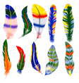 set of feathers vector image