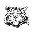 hand drawn abstract ink graphic rough tiger vector image