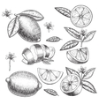 hand drawn lime or lemon set Whole vector image
