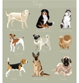 Different type of dogs set isolated Big and small vector image vector image