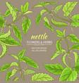 nettle frame vector image