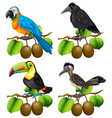 Different types of birds on kiwi branch vector image