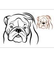 English Bulldog 1 vector image