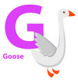 white goose with purple character g on abc card vector image