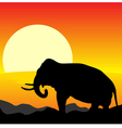 africa sunset elephant vector image