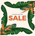tropical summer sale promo poster with rainforest vector image