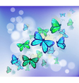 Butterflies in a stationery vector image vector image