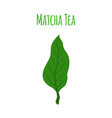 matcha tea leaf - natural organic plantflat style vector image
