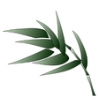 Bamboo branch vector image